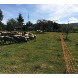 Malla electrificada para oveja