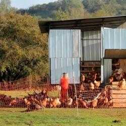 Malla electrificada para gallinas