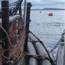 Cerco eléctrico para lobos marinos