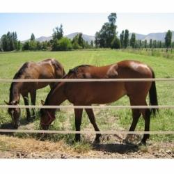 Cerco eléctrico para equinos