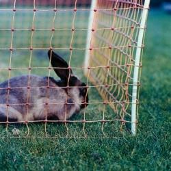 Cerco eléctrico para conejos