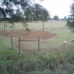 Cerco eléctrico ganadero fijo para ovinos