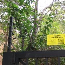 Cerco Eléctrico de Seguridad Residencial
